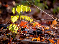 Busey Woods 2013-11-23